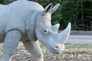 Waco Sculpture Zoo - White Rhino